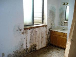 Mold Remediation Services in Cook and Lake County, IL by ServiceMaster DAK