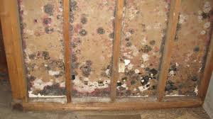 Mold Remediation in Cook and Lake County, IL by ServiceMaster DAK