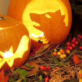 Fire Safety Tips for Halloween Festivities